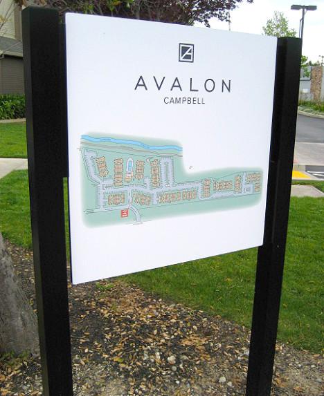 Avalon Campbell